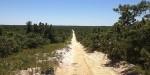Pygmy Pines